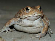 toad-2x_0
