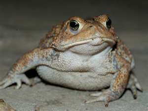 toad_1