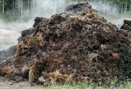 steaming-manure